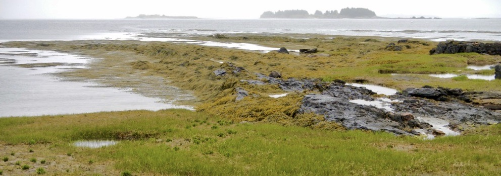 Exposed at Low Tide in Casco Bay