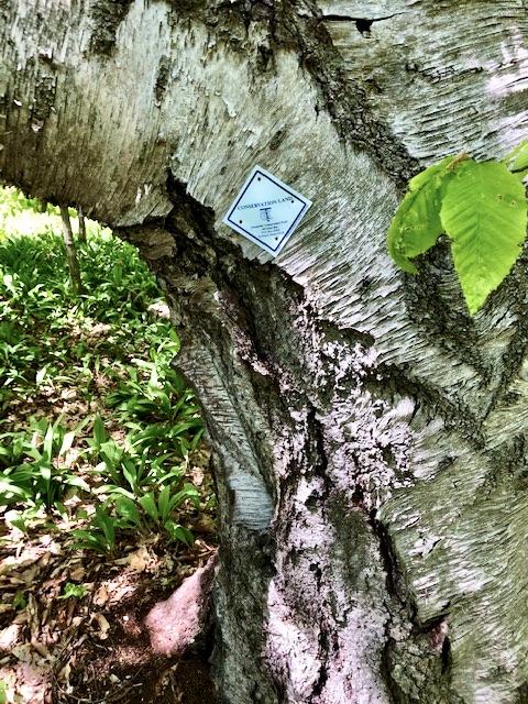 Memorial Woods, LDI