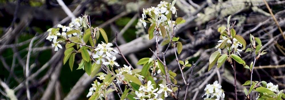OCT Invasive Plant Species