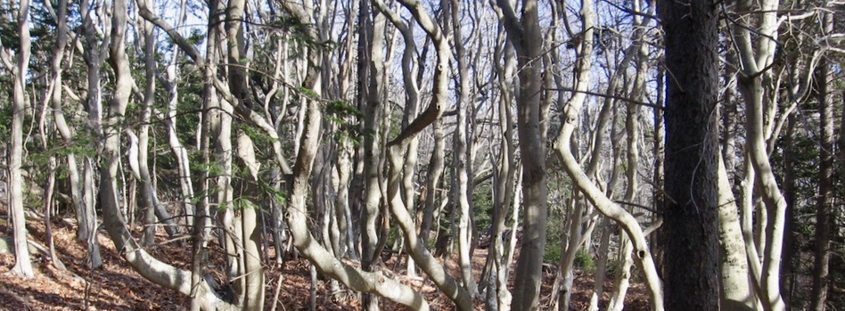 Trees winding skyward