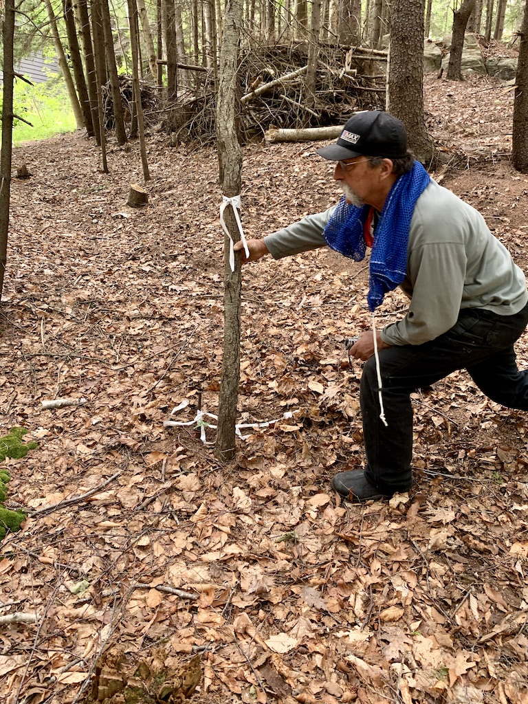 Tom Bergh checks a survey marker in Skillings Woods